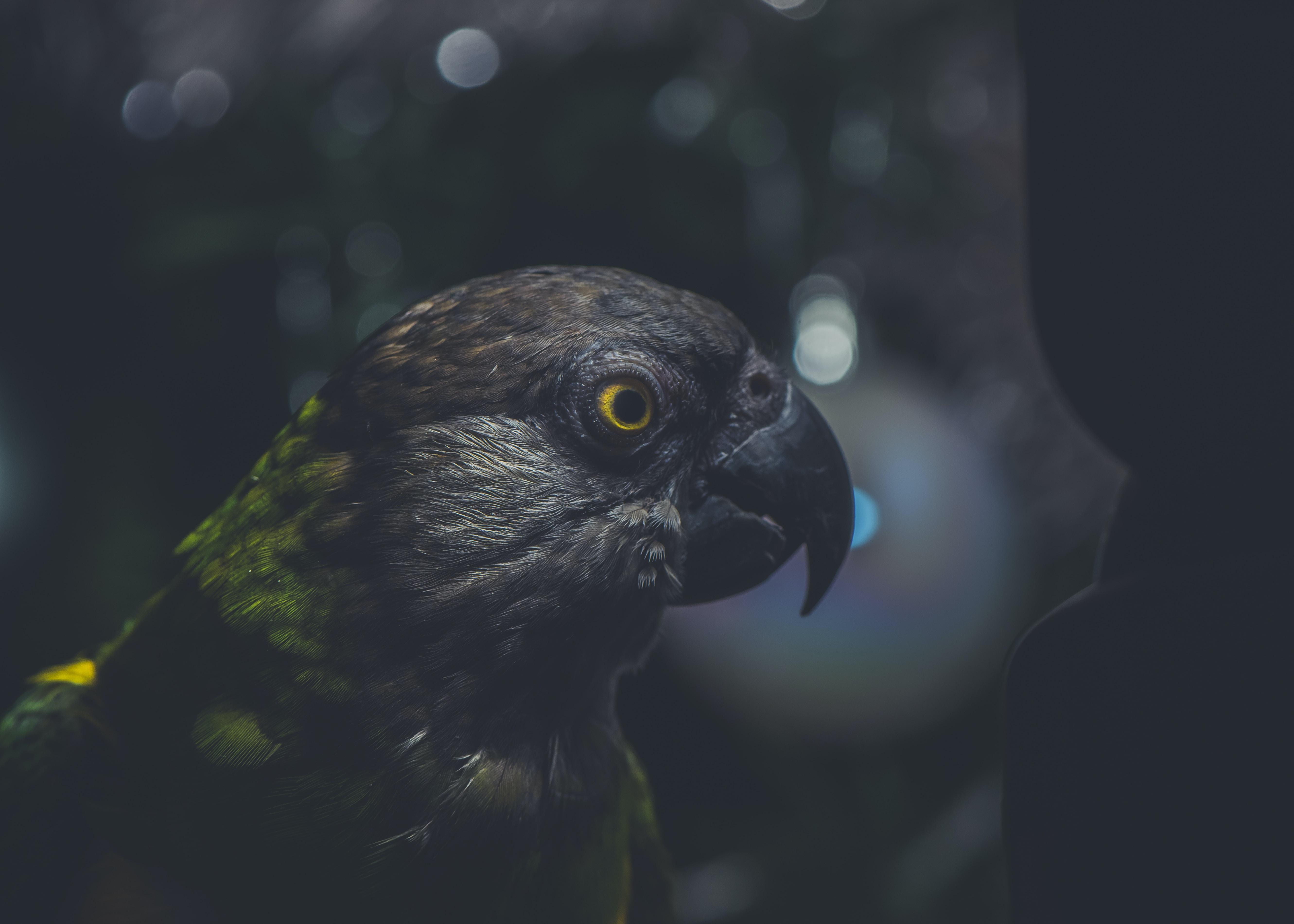 bokeh photography of green and gray bird