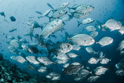 silver fishes underwater fish zoom background
