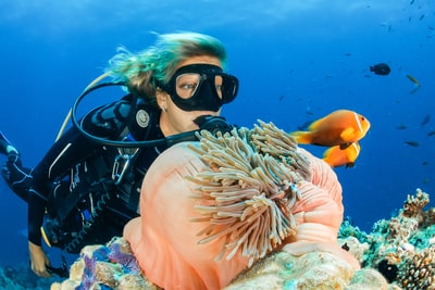 female diver near sea sponge during daytime diving teams background