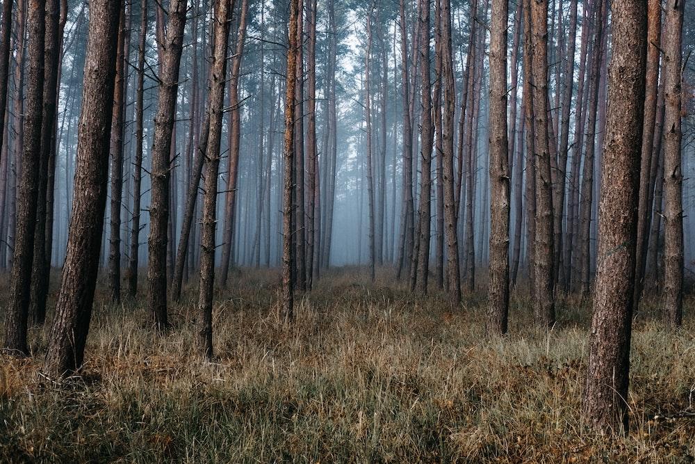 fog in woods