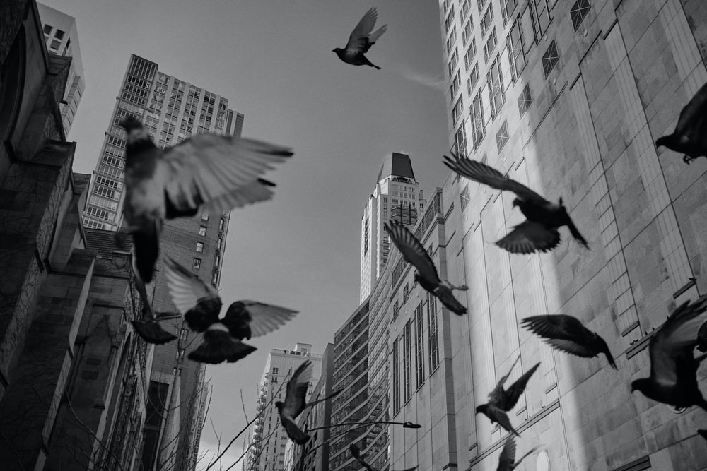 grayscale photo of birds flying together