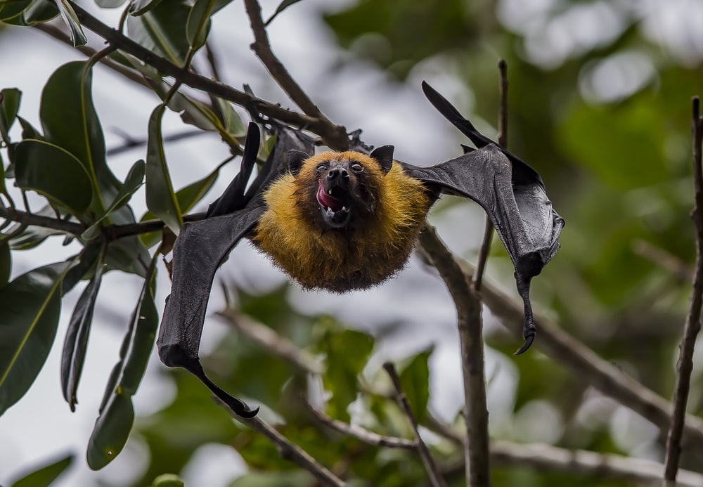 selective focus photography of bat during daytime
