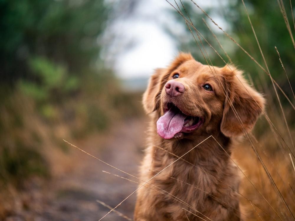 medium-coated brown dog during daytime
