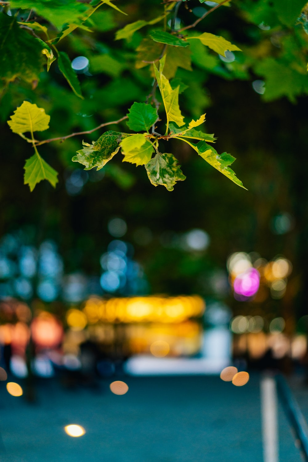 bokey photography of green leaves