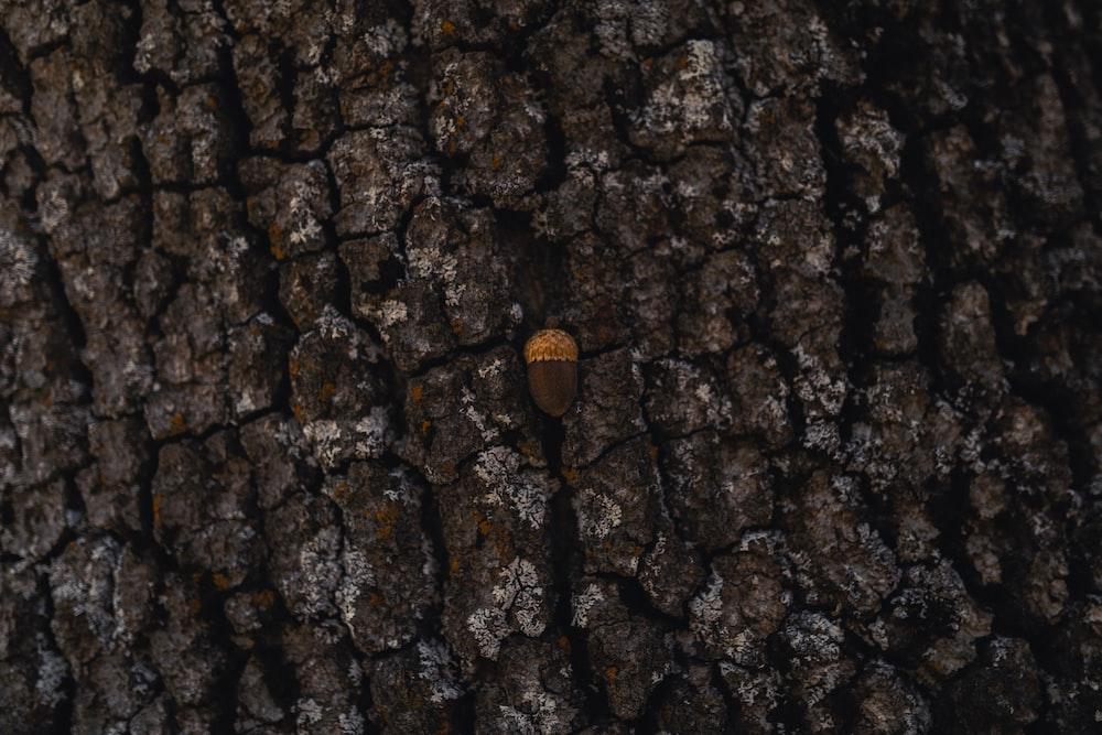 brown tree close-up