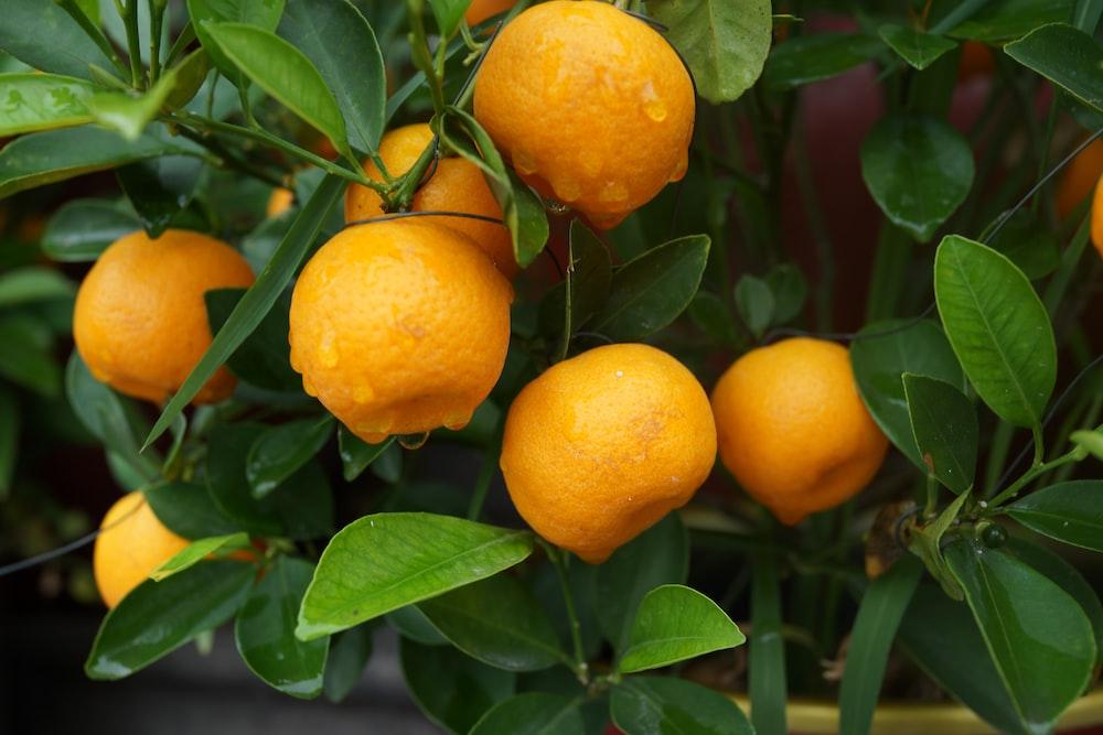 bunch of yellow lemons