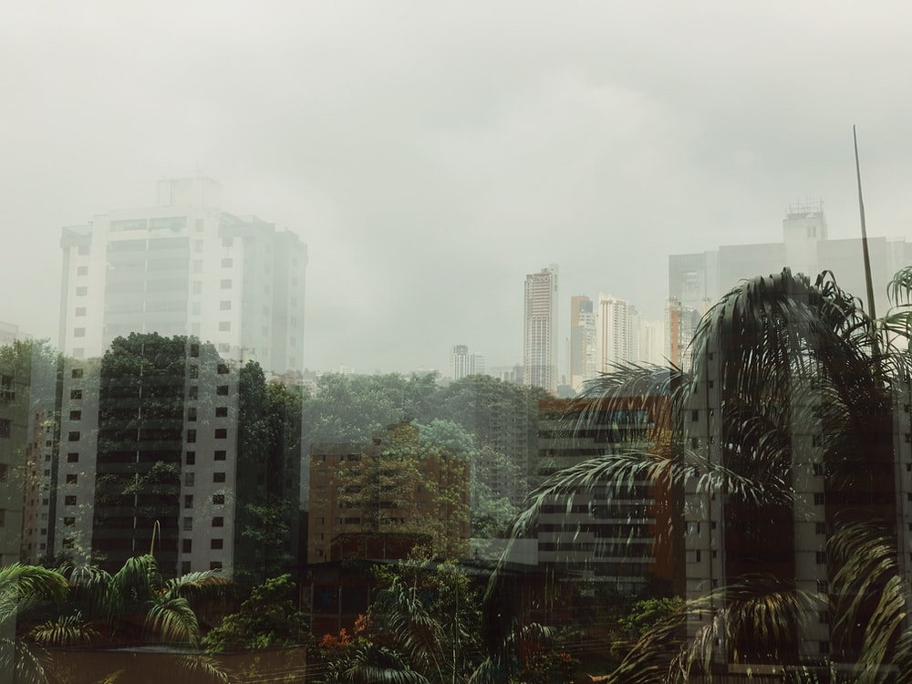 trees and high rise buildings