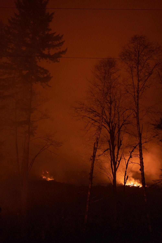 fire near trees