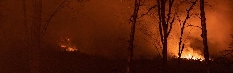 オーストラリアの山火事が止まらない。コアラなど多くの動物が犠牲になっている火災に迫る。