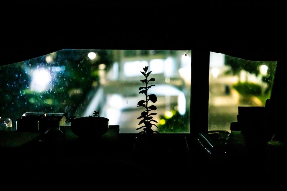 plant near window