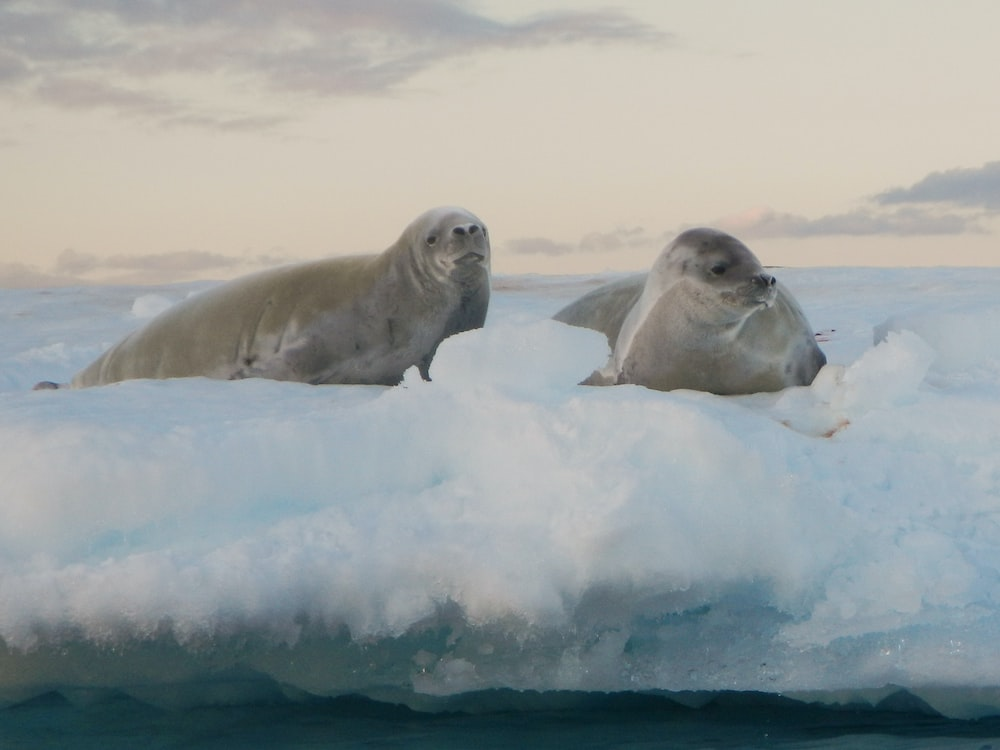 two sea lion photography