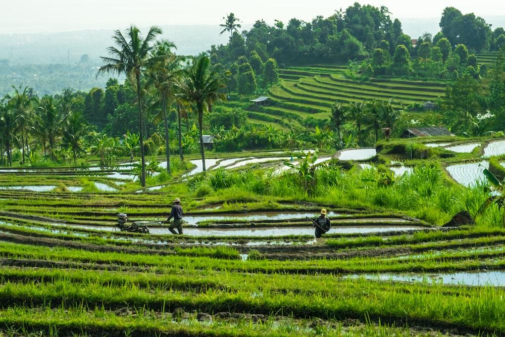 green crop field during daytime