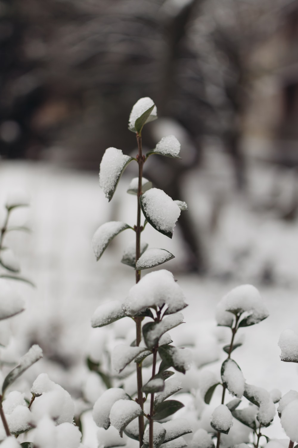 snow covered green leafed plant in selective focus photography