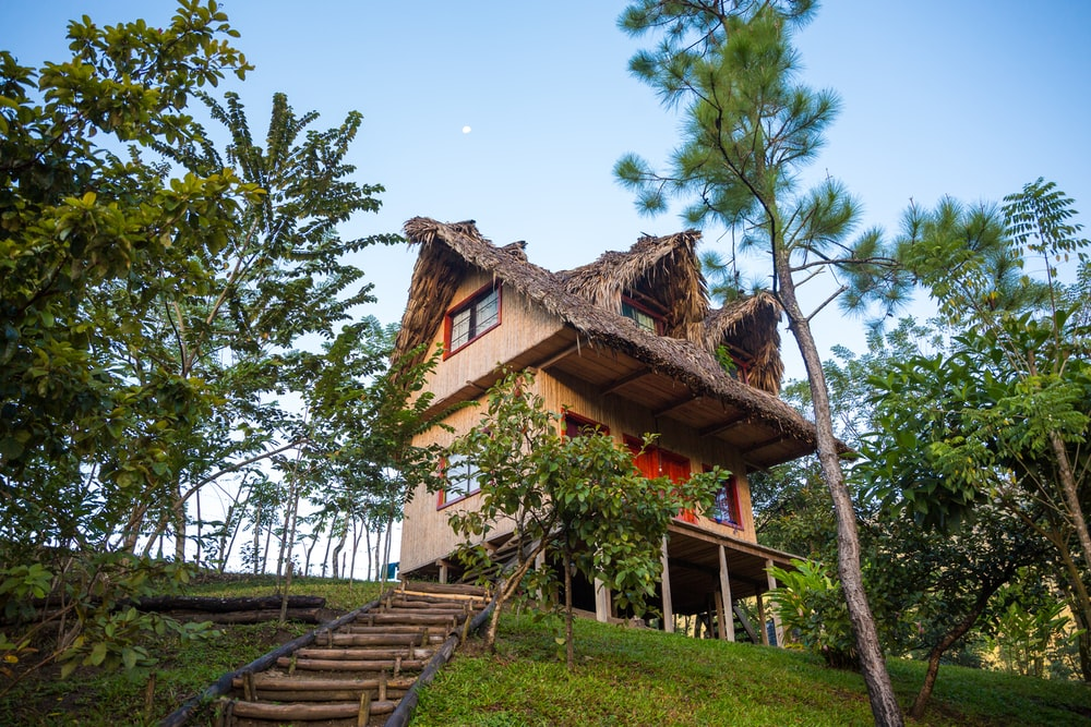 brown wooden house surround with trees