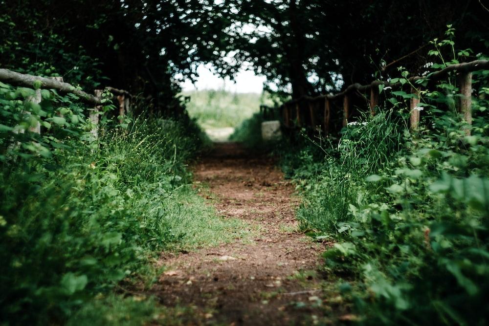 empty pathway in between grass