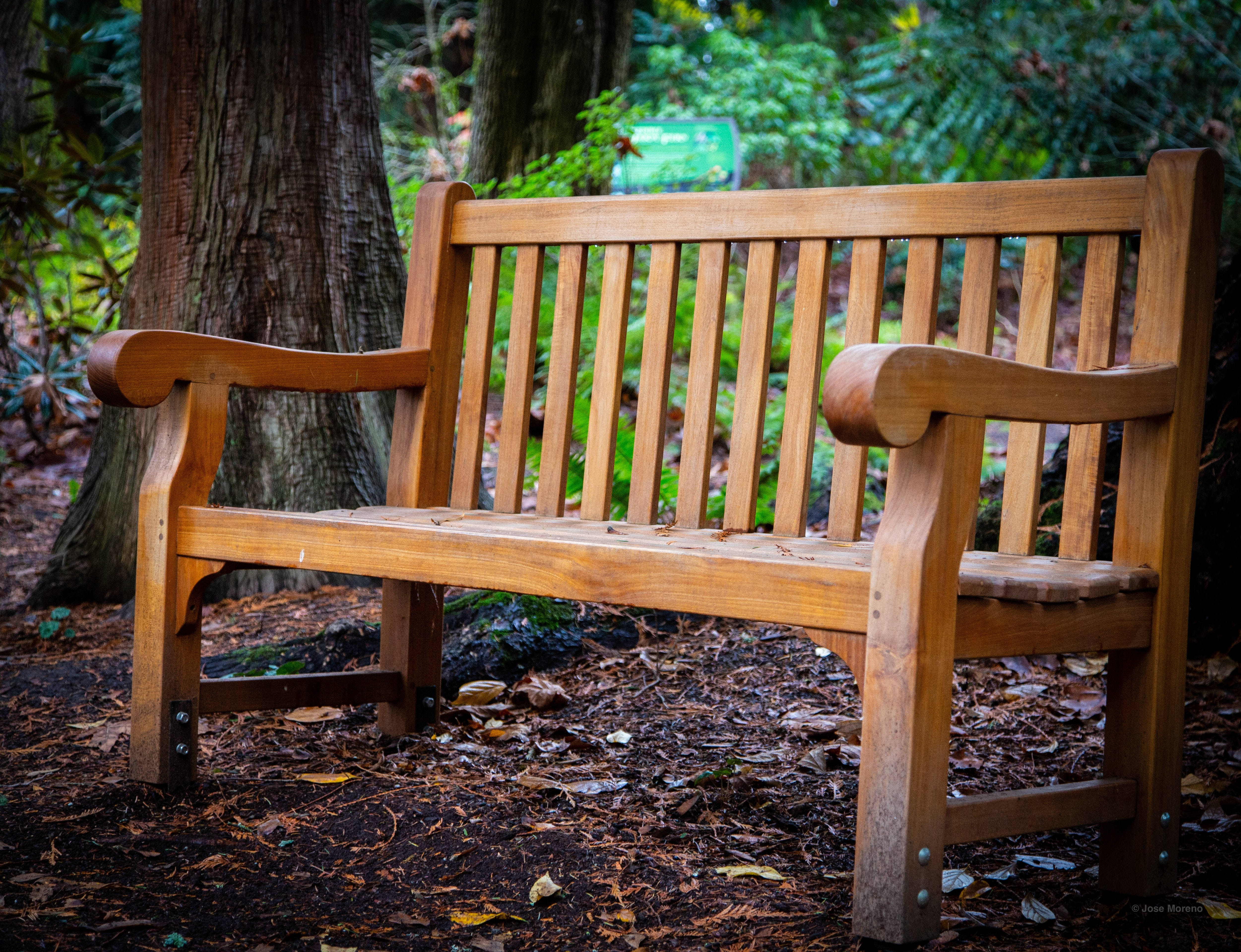 vacant brown wooden bench near tree