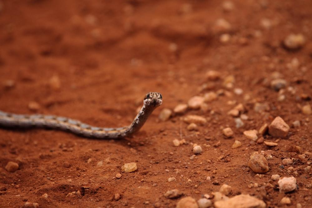 brown tiny snake crawling on dirt soil