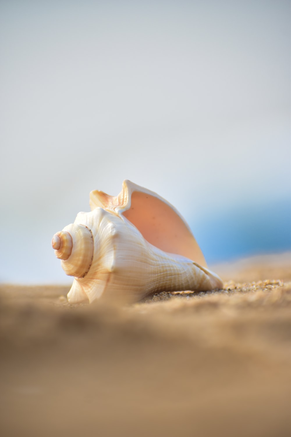 shallow focus photography of white conch