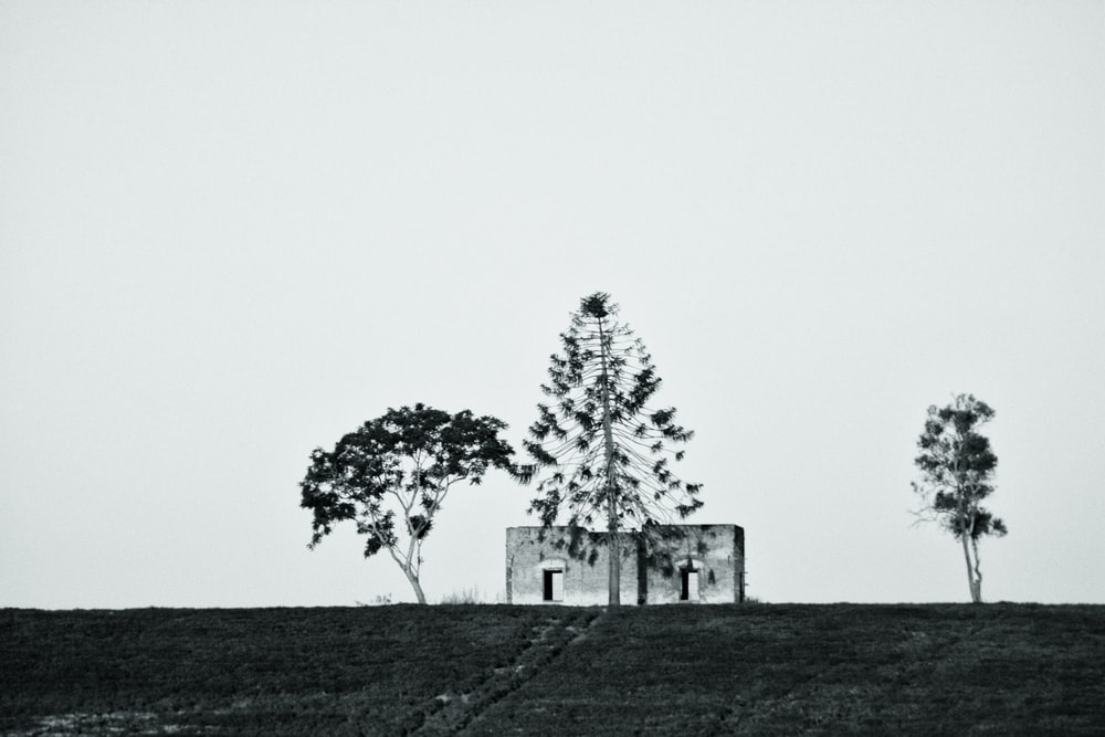 grayscale photo of concrete house near three trees