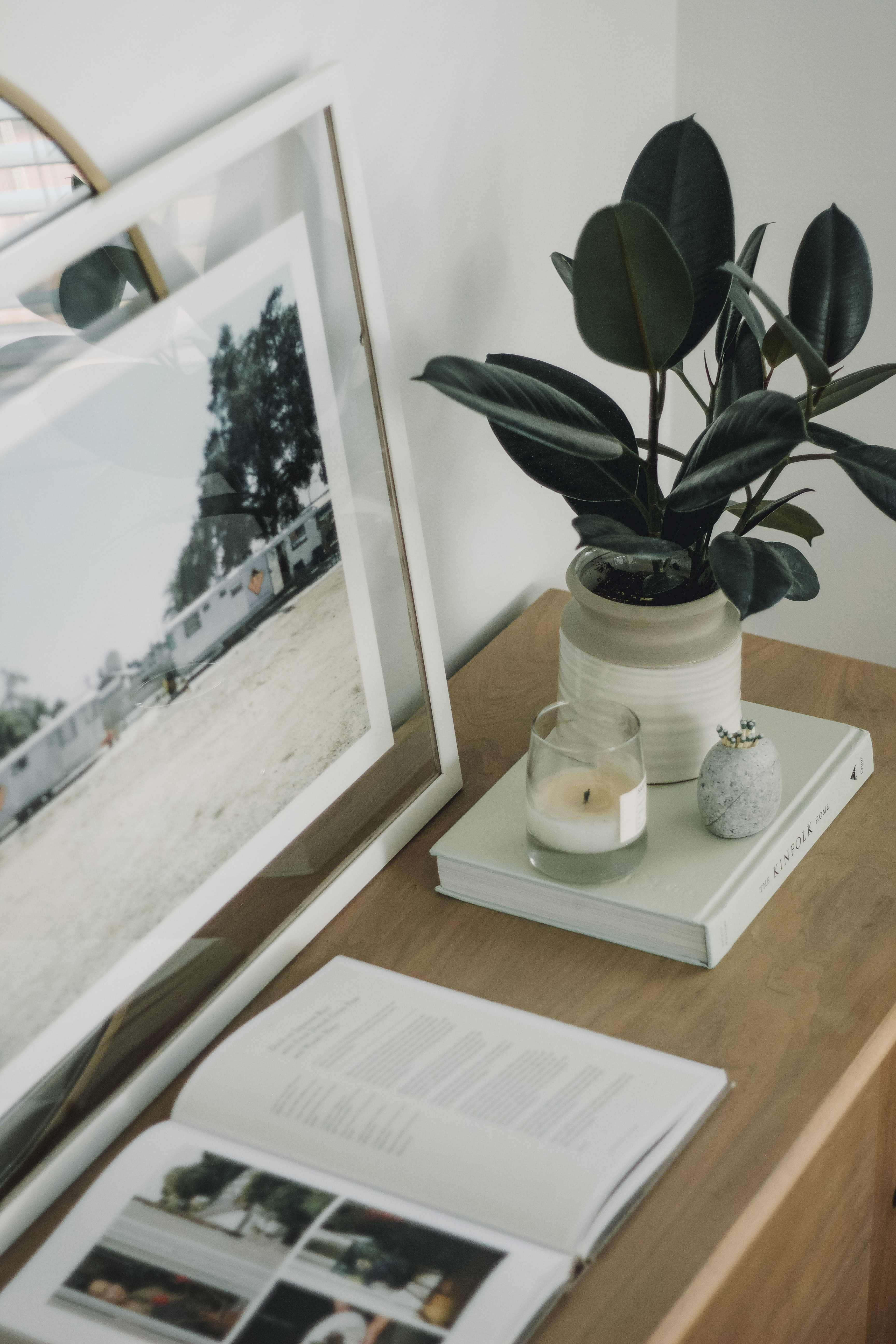 green rubber plant in white jar
