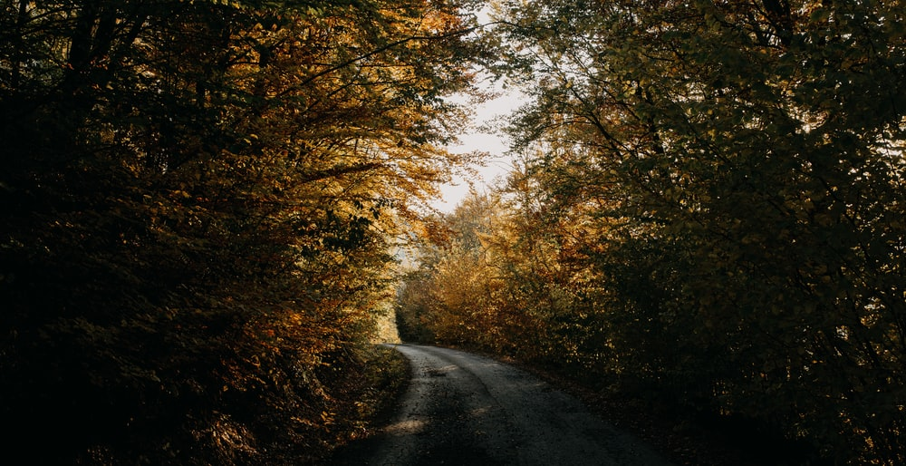 empty road surrounded by brown leaf trees during daytime