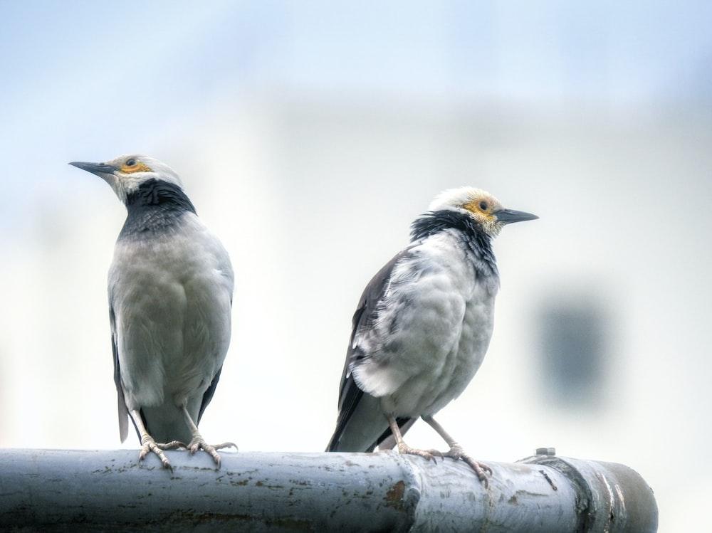 two white birds porches on grey metal bar