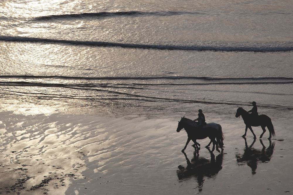 two person riding horse walking on the seashore