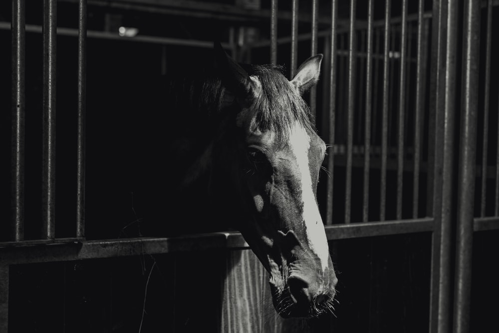 grayscale photography of horse in cage
