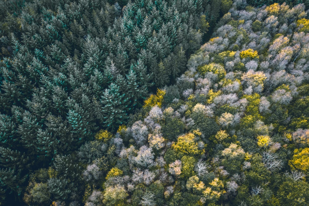 aerial photography of trees during daytime
