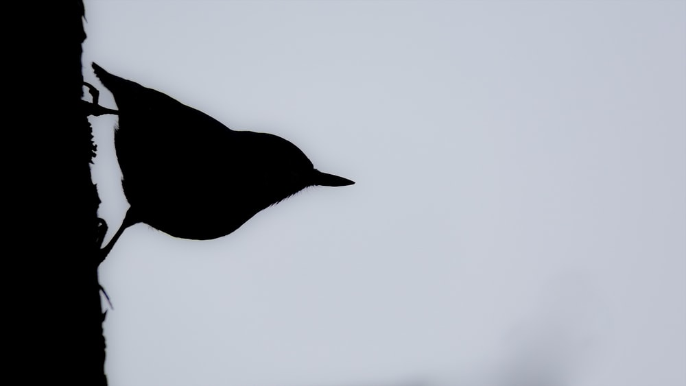 silhouette of bird painting