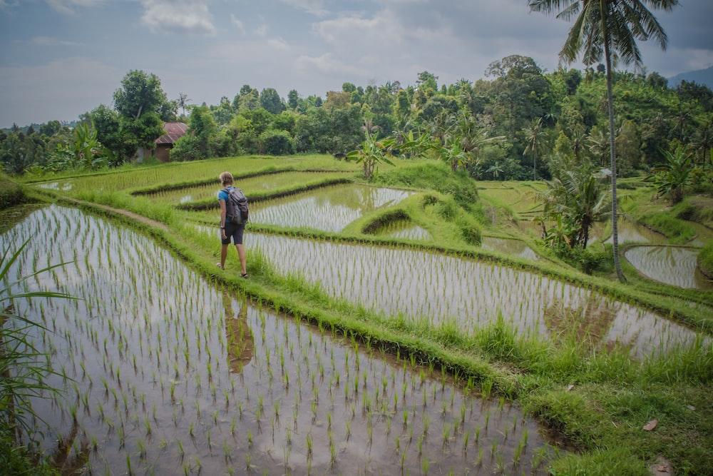 man walking beside wheat field