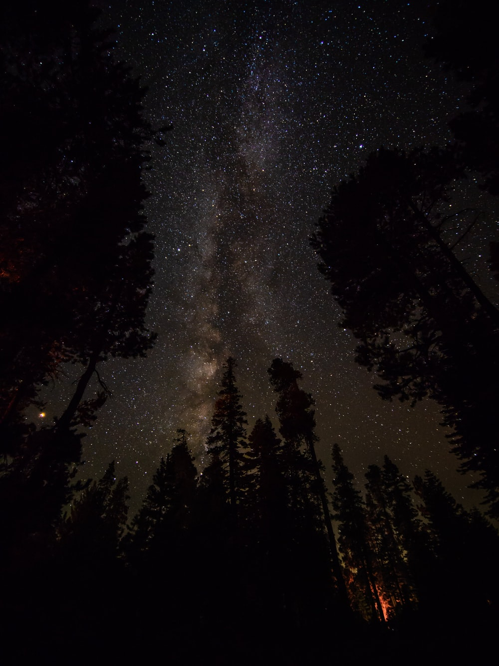 silhouette of pine trees under clear night sky