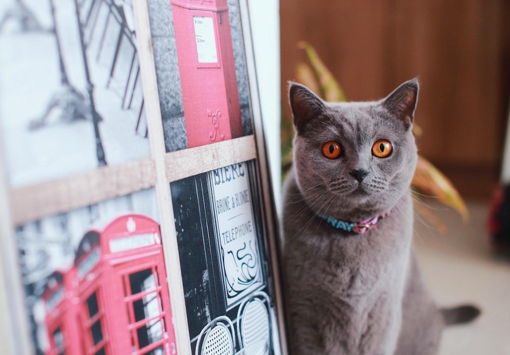 cat beside poster