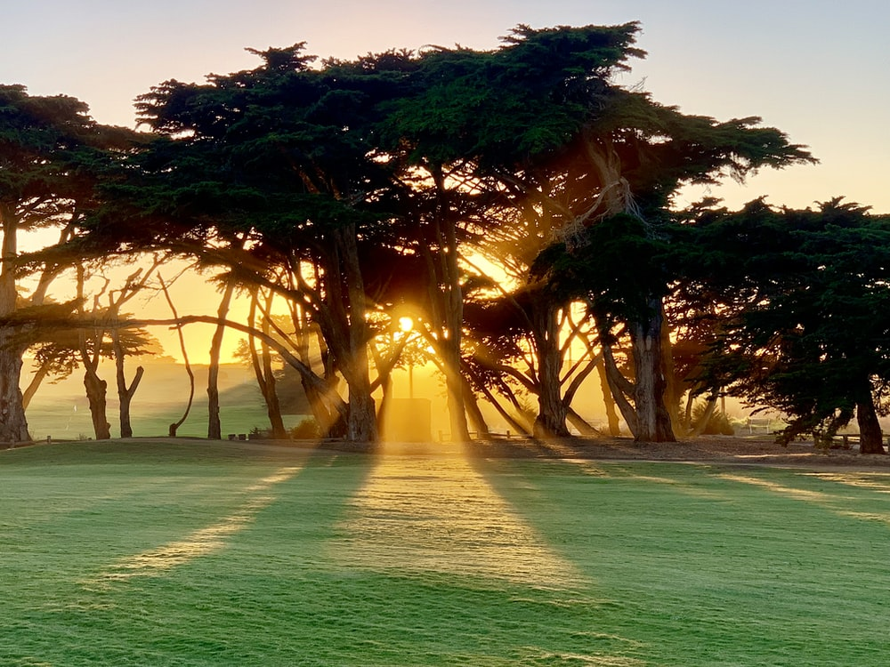 sun shining over trees
