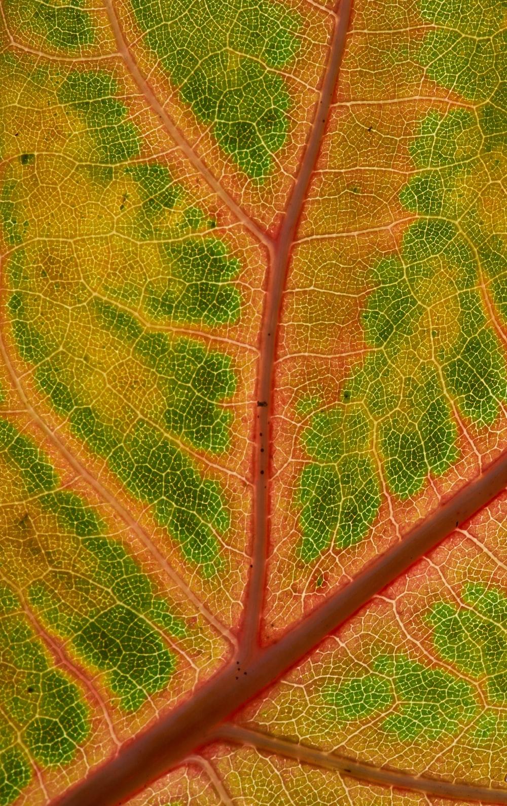 orange and green leaf