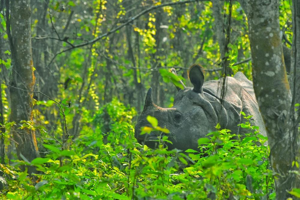 Animal, mammal, wildlife and rhino | HD photo by Roshan