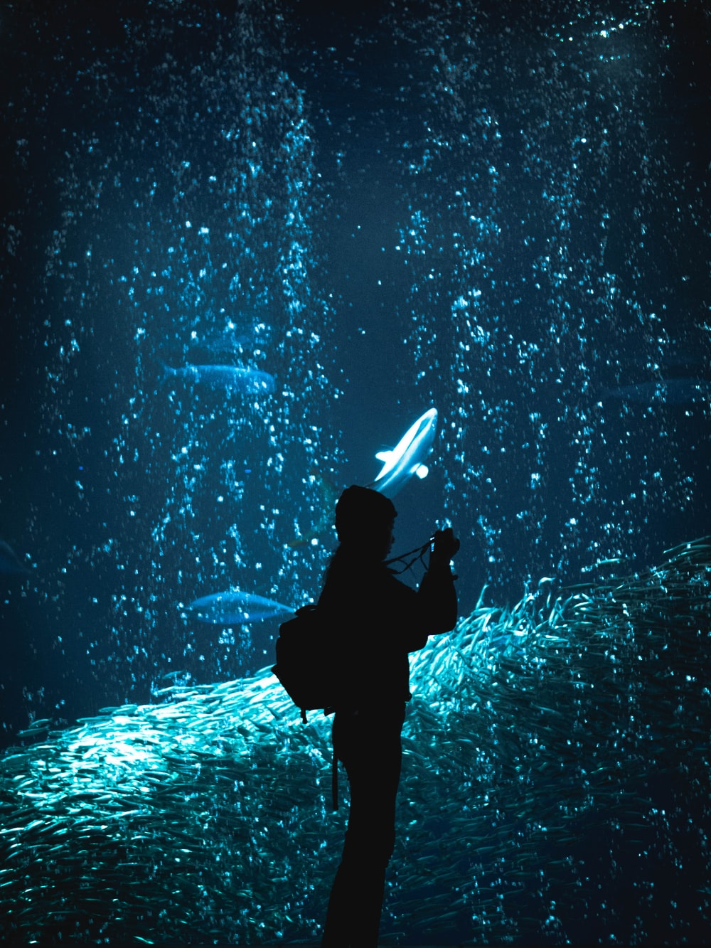 silhouette of person on clear glass fish tank