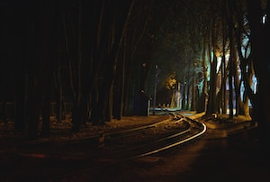 curve road at forest