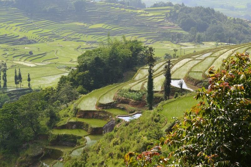 green rice terraces photo