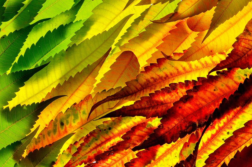 assorted-color leaves