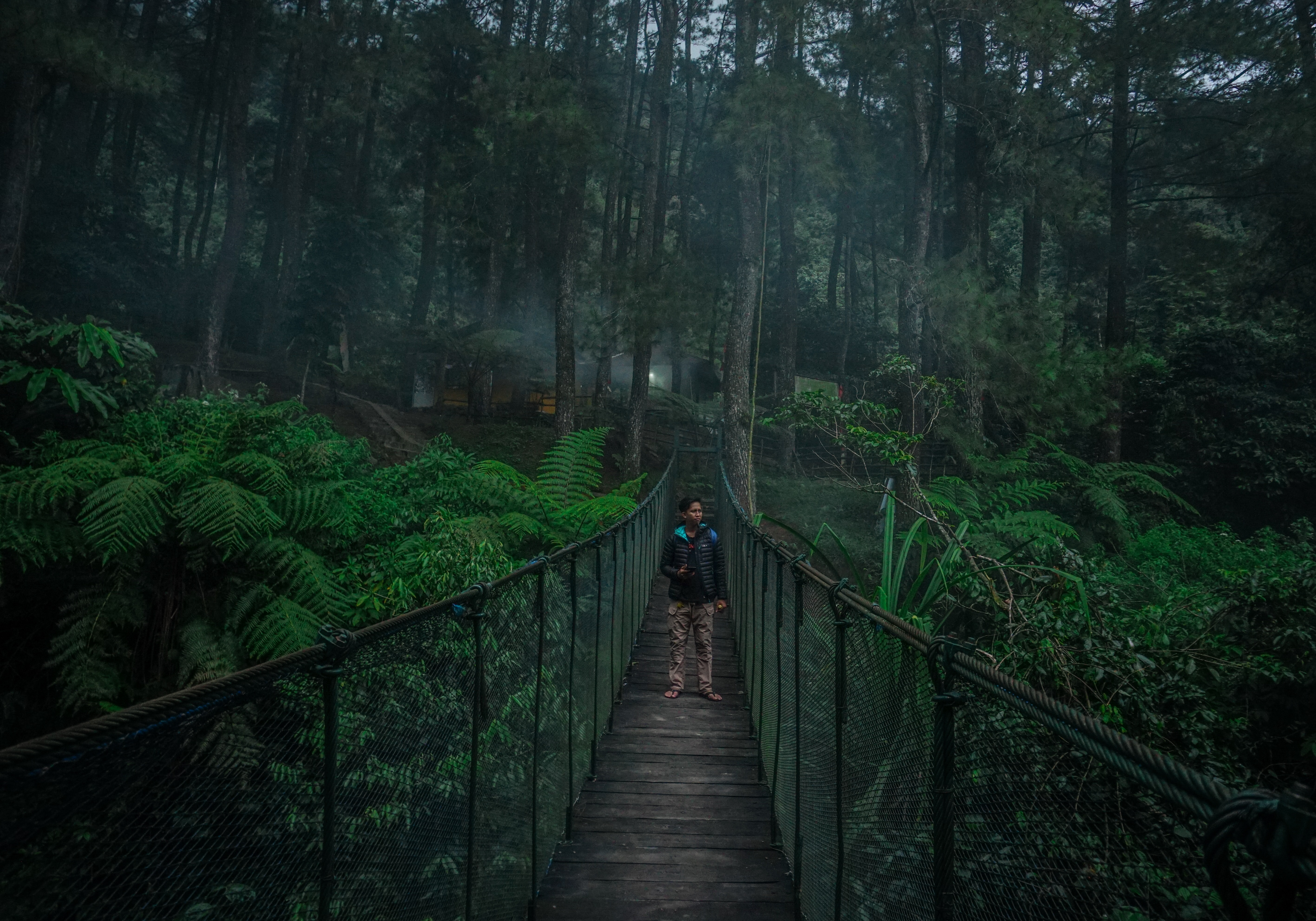 person standing on hanging bridge surrounded by trees