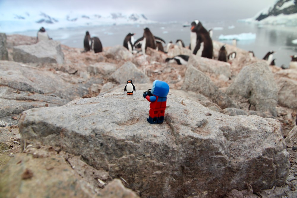 flock of black-and-white penguins near body of water