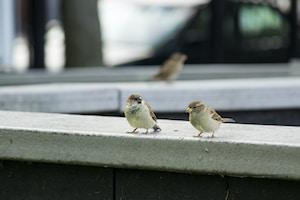 two birds perched on concrete ledge