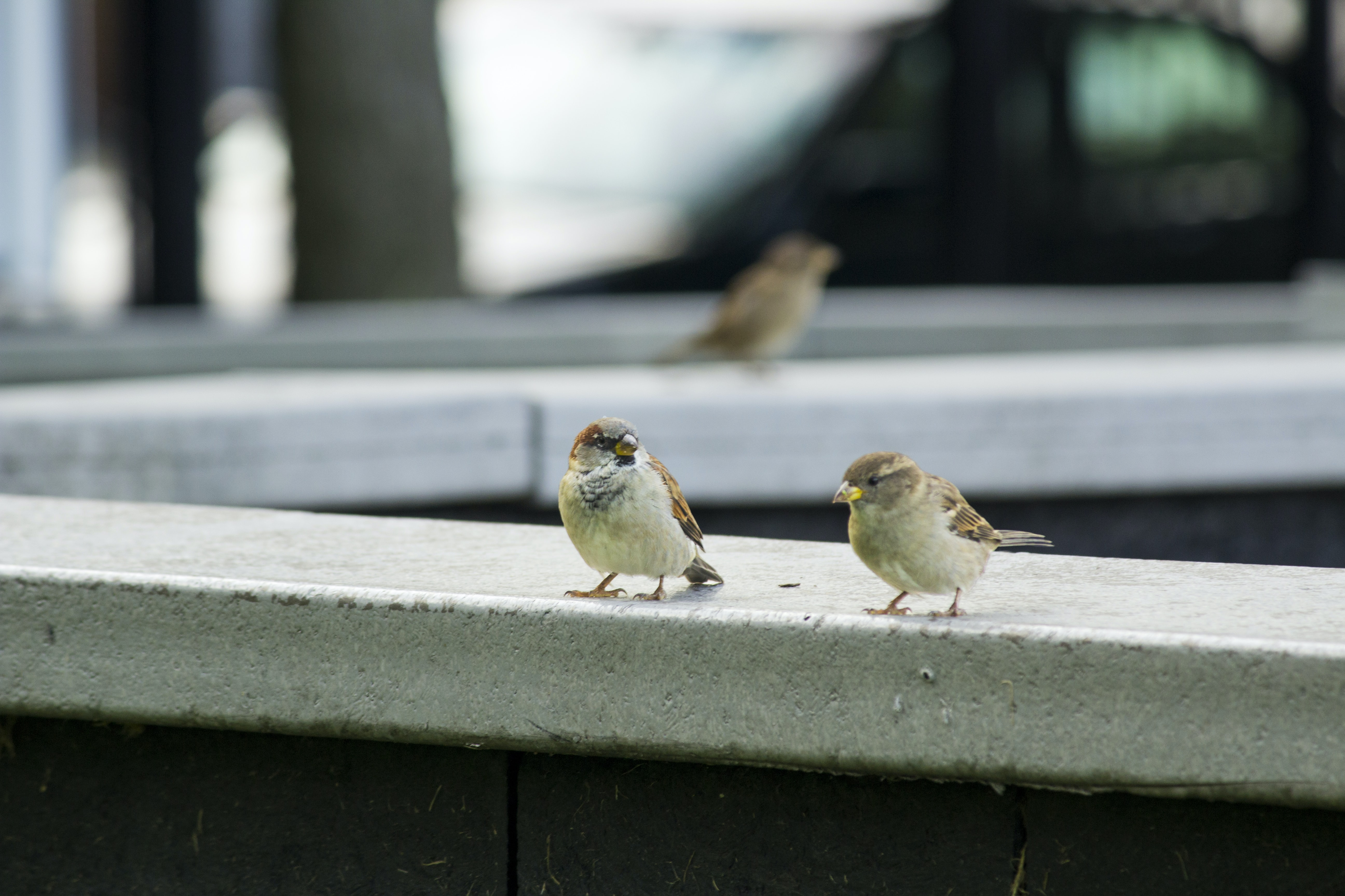 two birds perched on concrete ledge