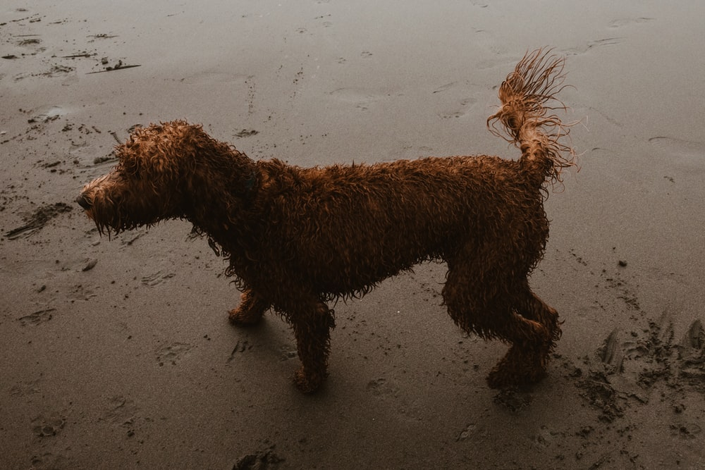 long-coat brown dog on grey surface