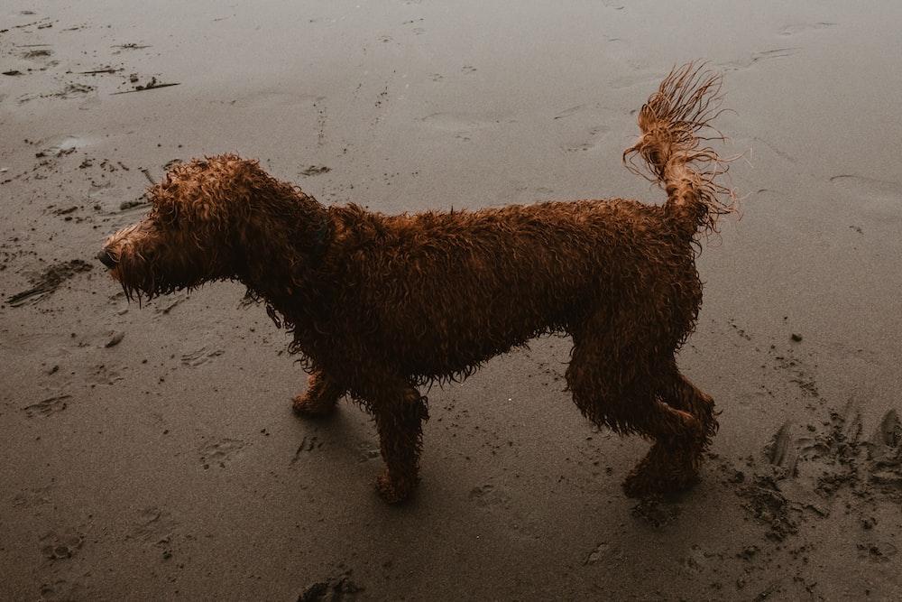 long-coat brown dog on grey surface
