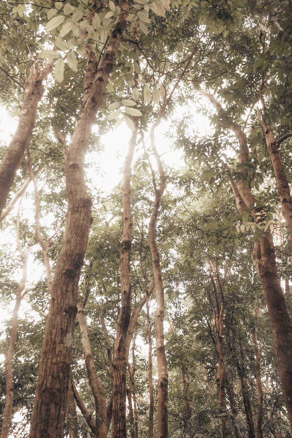 low-angle photography of green leafed tall trees