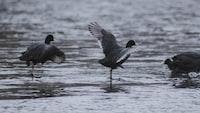 three birds on body of water