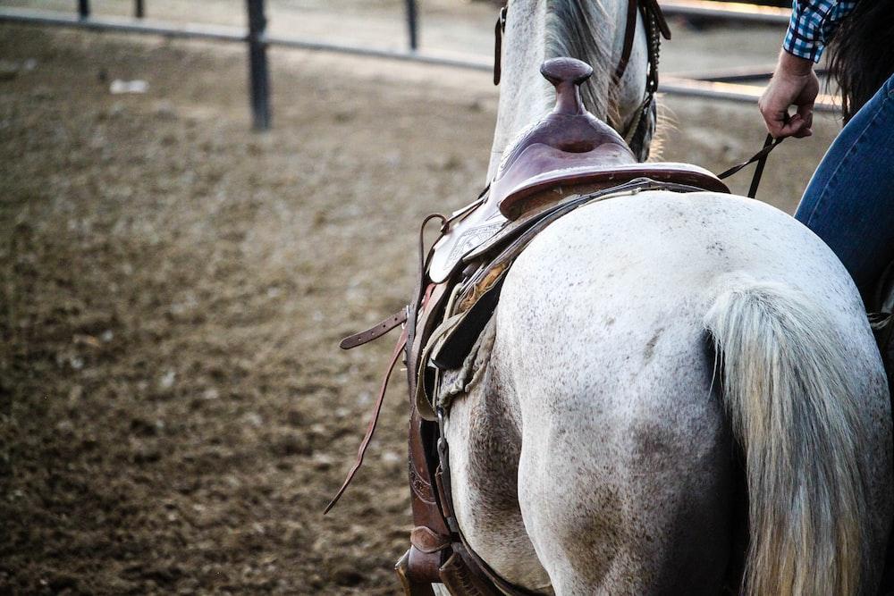 gray horse closeup photography