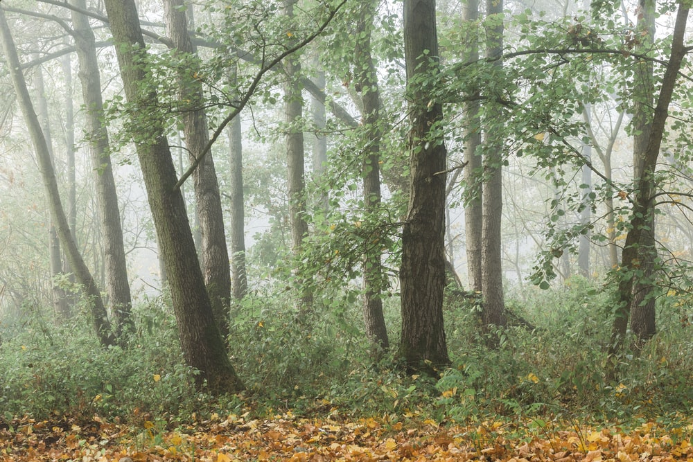 trees covered in mist during daytime